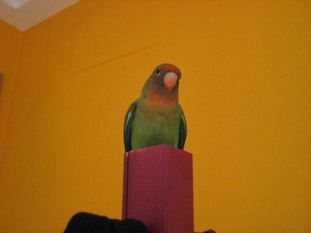 Aqui en su mejor pose encima del perchero
