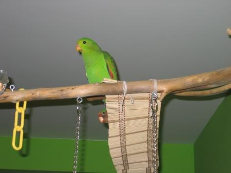 Horus en su rama y Rel custodiando su puente ;)
