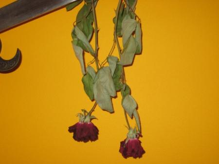 Como se ve, las hojas tienden a juntarse que será lo que usemos para darle forme, rollo bonsái xD